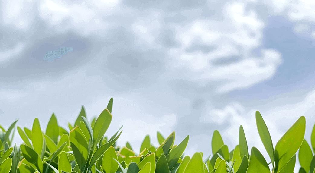 La qualité des feuilles